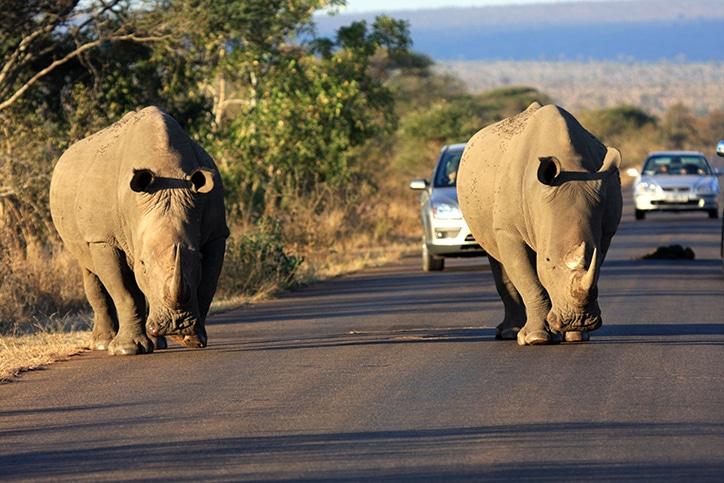 Safais en Sudafrica
